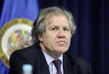 La OEA perdió toda credibilidad al nombrar a Muyshondt como su asesor