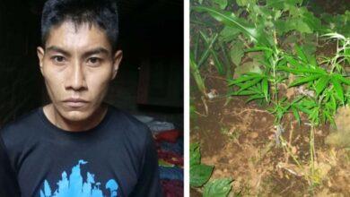 """Por cultivó de marihuana y portación de arma de fuego fue detenido pandillero alias """"el chino"""" en Sonsonate"""